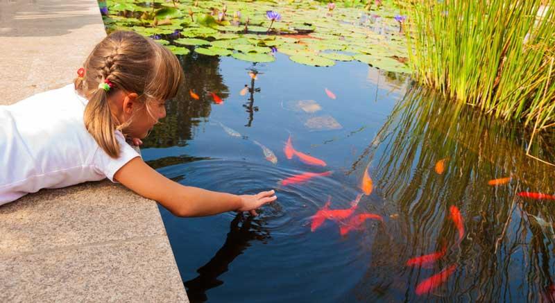 Ook in een zwemvijver kunnen vissen zitten